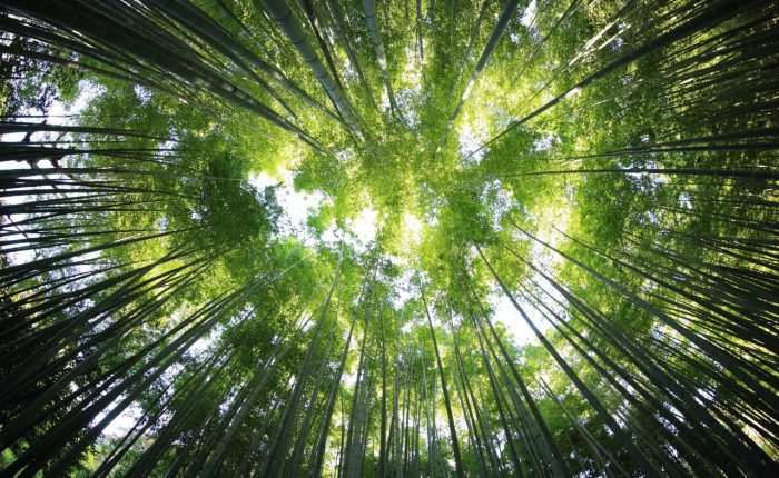 sustainabililty in business